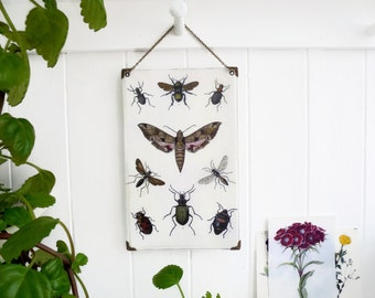 Reversible Hanging Vinyl wall decor Antique Lithographs insects