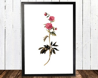 Simple Botanical Print