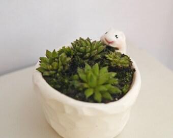 Fétiche tiny garden for succulent babies