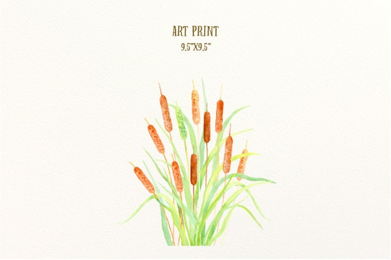 Watercolor Clip Art Cattail Typha Bulrush Seed Head