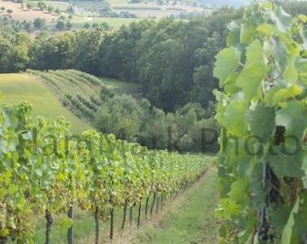 German Vineyard