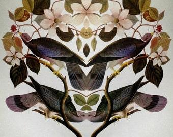 Strange Bird Audubon Collage: Band-tailed Pigeon
