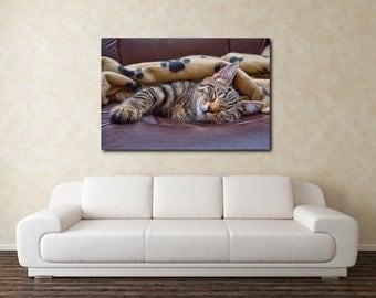 Cat Canvas Print, Sleeping silver tabby cat canvas, pet photography, cat kitten photography, sleeping kitten kitten canvas, cat print