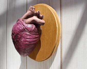 Medium Human Heart