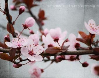 Pretty Pink Spring Blossom Branch Print