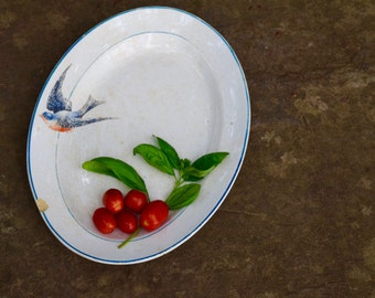 Bluebird Platter, Chippy, Bird Platter, Bluebird Decor, Blue Bird, Shabby, Bird Decor, Serving Platter, New York, Missouri, State Bird