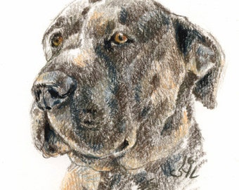 Petit portrait de chat ou chien  (A5)/ Small dog or cat portrait (A5)