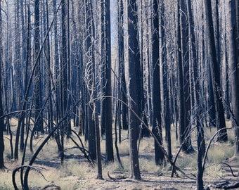 Burn Area, Yosemite