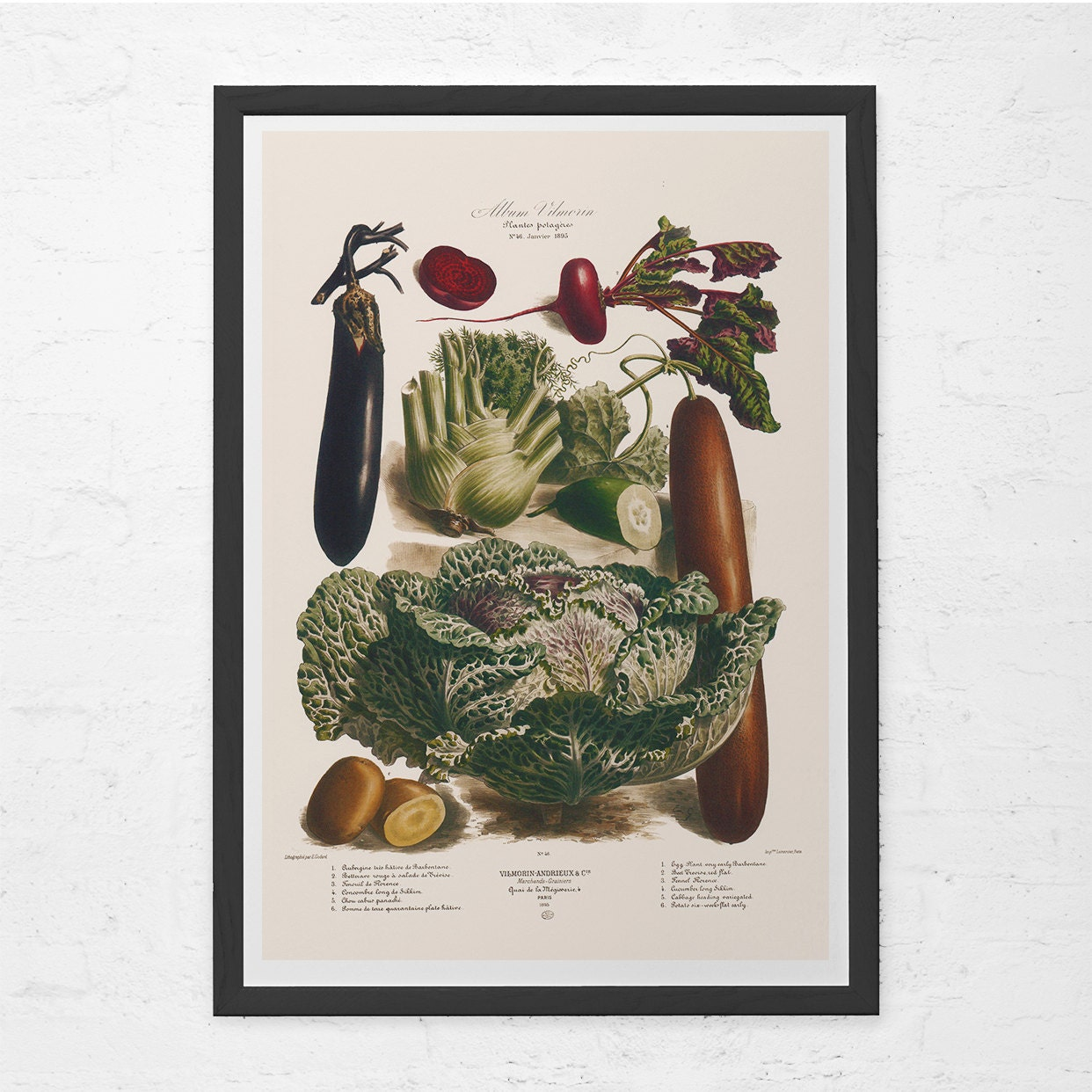 ANTIQUE KITCHEN PRINT Vintage Vegetable Print Antique Food