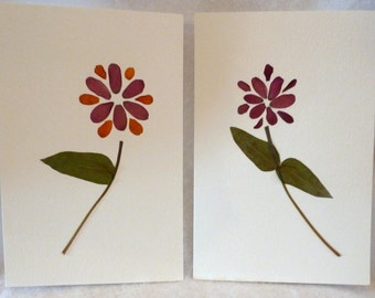 Real Pressed Flower Zinnia Botanical Art Herbarium Set Collection 8x10 Prematted