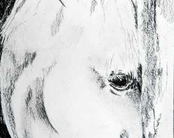 Horse Charcoal, 8.5x5.5, Original charcoal drawing