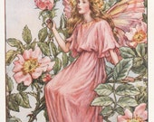 Flower Fairies The WILD ROSE FAIRY Vintage Print c1930 by Cicely Mary Barker