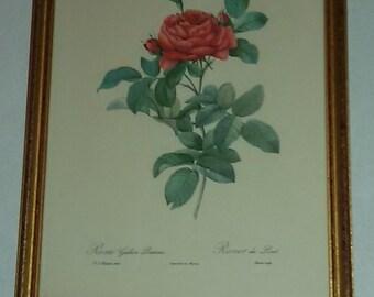 Vintage / Roses of P.J.REDOUTE / burning former printing Rémond