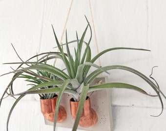 Copper Cement Double Air Plant Holder | Air Plant Wall Hanging | Air Plant Holder | Planter | Hanging Plant | Gift For Her
