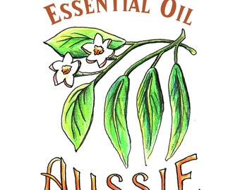 Organic Essential Oil Blend, Aussie 15ml. Tea Tree, Eucalyptus, and Lime Essential Oils. Fair Trade use in skincare, aromatherapy, cleaning.