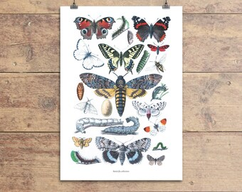 Butterfly collection vintage illustration print