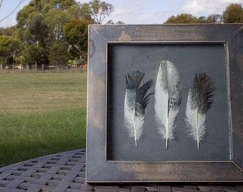 Ibis feather frame