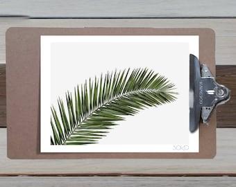Notepad photo print table leaf Palm (Palm). Botanical and tropical décor
