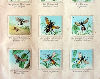 1880 original Hymenoptera trading cards,12 cps antique color illustration album, chromo bees waps ants print,  insects engraving in relief.