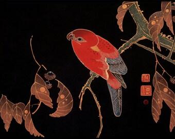 Parrot Digital Print - Parrot Print - Black Gold Red - Japanese Vintage Print - Japanese Art - Woodblock - Ito Jakuchu - Digital Download