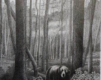 Black Bear in Carolina's Forest