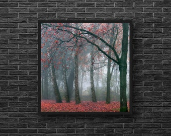 Red Forest Photo - Woodland Photo - Birches - Nature Photo - Forest Print - Red - Square Photo - Forest Wall Art - Forest Wall Decor