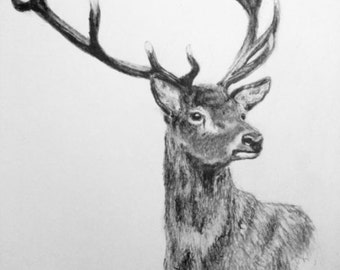 Stag Art Pencil Drawing