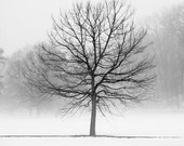 Winter Landscape Photography - Black and White Tree Prints - Extra Large Tree Art - Foggy Winter Woodland Nature Wall Art - Enchanted Forest