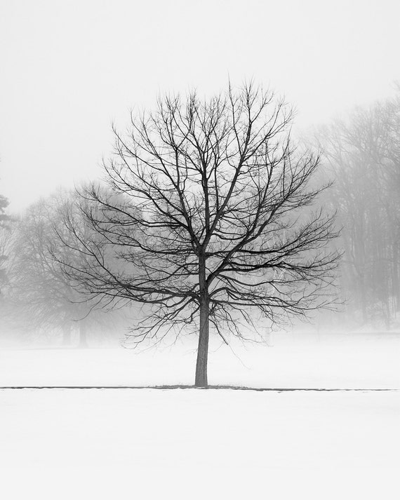 Tree Winter Landscape Photography Black and White Landscape