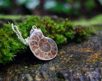 Ammonite Fossil Shell Necklace | Real Ammonite Shell Pendant | Fossilized Shell Necklace