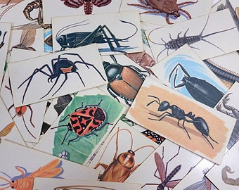 6 Vintage Flash Cards | Insect Bug Nature Cards | Black Widow Spider | Butterfly Beetles | Halloween Altered Art | Mixed Media Supplies
