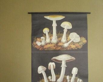SALE! - Vintage German Pul-Down Botanical Print or Chart - Vintage School Death Cap Mushroom Botany Poster from Germany -1970s