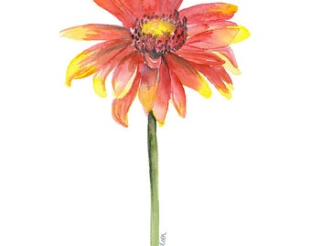 Indian Blanket Watercolor Painting - 4 x 6 - Giclee Fine Art Print Reproduction - Texas Wildflower