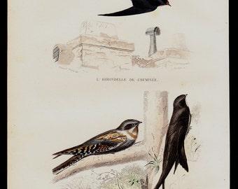 Antique print, 1848 Antique BIRD print. Lovely songbirds, swallow. Fine hand colored. Original antique ornithology engraving