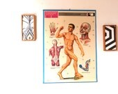 MUSCLES 1971 Vintage HUMAN BODY Anatomy School Chart - Muscle Poster - School vintage educational chart