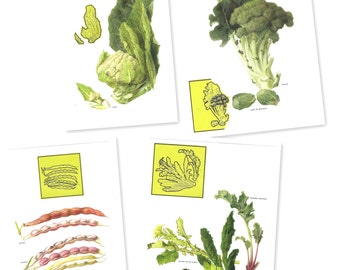 4 VEGETABLE Unique COLLAGE from Vintage Illustrated Posters - From 1973 - Vegetables Spanish HORTALIZAS