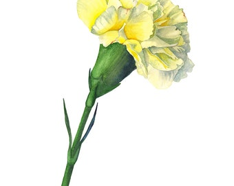 Carnation watercolour painting, C11616, Carnation print, carnation botanical art, A3 size print, lemon flower, flower watercolor print