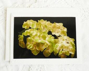 Green Hydrangea Photo Notecard