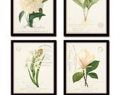 French Botanical Collage Print Set No. 3, Botanical, Print Set, Wall Art, Giclee, Illustration, Vintage Botanical, French Style, White Peony