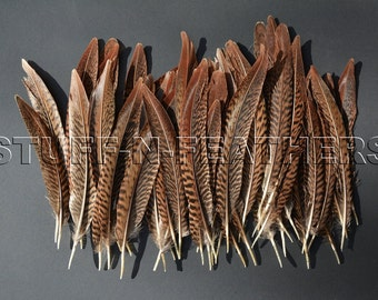 Wholesale / bulk feathers - natural brown Golden pheasant feathers for millinery, jewelry, crafts, 60 pcs / 6-8 in (15-20cm) long / FB179-6