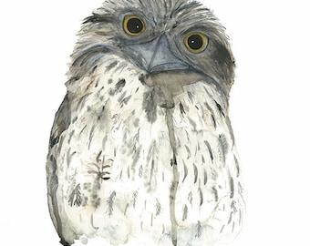 Tawny Frogmouth, Bird Watercolour, Australian Bird Art, Woodland Print, Nature Illustrations, Night bird Print