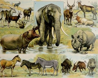 1900 Antique lithograph of WILD ANIMALS: Elephant, Zebra, Deer, Rhinoceros, Razorback, Wolf, Fox, Bear, Lion, Tiger. 116 years old print.