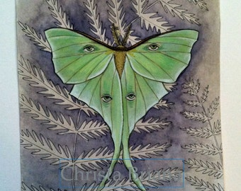 "Print - ""Luna Moth"""