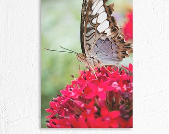 Butterfly and Flower Macro Shot Floral Photography