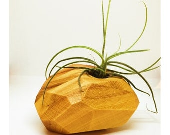 Air Plant Holder. Succulent Planter. Salvaged Wood Vase. Airplant Holders. One of A Kind (OOAK) Valentine's Day Gift Home Decor Tiny Vase.