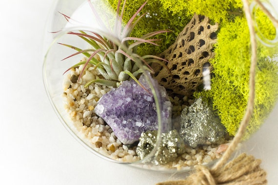 Terrarium Kit Amethyst Cluster with Pyrite Air Plant || Large Round Hanging