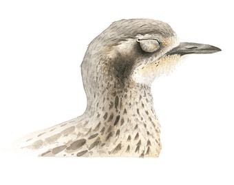 Bush-stone Curlew Original Watercolour Avian Faces Series 11/12