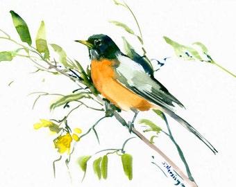 "American Robin, original watercolor painting bird 12"" x 9"""