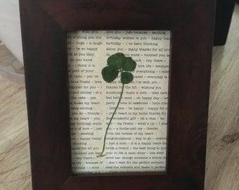 Framed Four Leaf Clover
