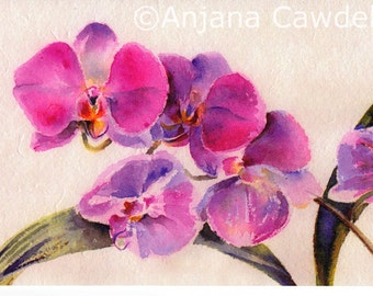 Orchid - blank greetings card